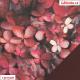 Kočárkovina, Purpurové listy, kombinace s koženkou SOFT 24 vínovou