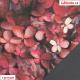 Kočárkovina, Purpurové listy, kombinace s koženkou SOFT LESK 112 černošedou