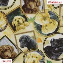 Plátno USA - QT Labrador-able - Fotky Labradorů, 15x15 cm